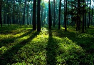 bigstock-Forest-Spring-Landscape--Fore-268705675