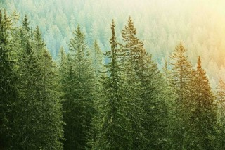 Countdown begins to a new Charter for Trees, Woods and People